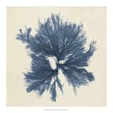 Coastal Seaweed V Giclee Print by Vision Studio
