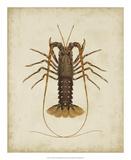 Crustaceans II Giclée-tryk af James Sowerby