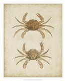 Crustaceans VI Giclée-tryk af James Sowerby