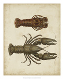 Crustaceans V Giclée-tryk af James Sowerby