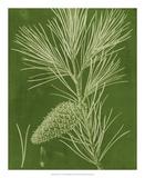 Modern Pine V Giclee Print by Vision Studio
