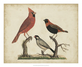 Cardinal & Grosbeak Reproduction procédé giclée par Friedrich Strack