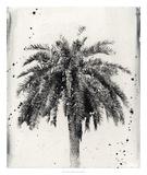 L.A. Dream II Giclee Print by Naomi McCavitt