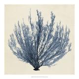 Coastal Seaweed III Giclee Print by Vision Studio