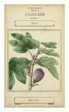 Linnaean Botany VI Giclee Print by Vision Studio