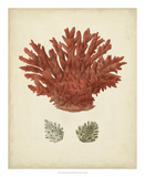 Antique Red Coral III Giclee Print by Vision Studio