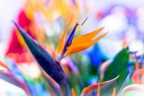Crane Flower or Bird of Paradise Lámina fotográfica por  warasit