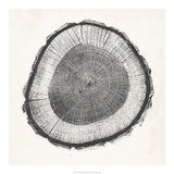 Tree Ring II Giclee Print by Vision Studio