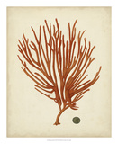 Antique Red Coral IV Giclee Print by Vision Studio