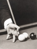 Billiards World Champion Willie Hoppe's Hand Was Insured for $100,000 Photo