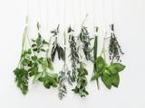 Various Fresh Herbs Hanging Up Fotografisk trykk av Tanya Zouev