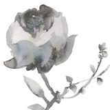 Winter Floral I Kunstdruck von Sandra Jacobs