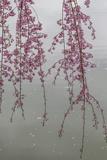 Kyoto Japan 3 Fotografie-Druck von Art Wolfe