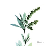 Lily of the Valley Prints by Albert Koetsier