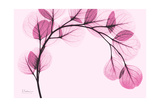 Pink Eucalyptus Premium Giclee Print by Albert Koetsier
