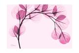 Pink Eucalyptus プレミアムジクレープリント : アルバート・クーツィール