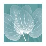 Teal Orchid Xray Premium Giclee Print by Albert Koetsier