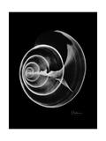 Ramshorn Shell Xray Stampa giclée premium di Albert Koetsier