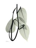 Pot Hos Leaf Portrait Pôsters por Albert Koetsier