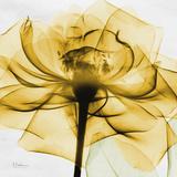 Golden Rose Close-Up Poster von Albert Koetsier