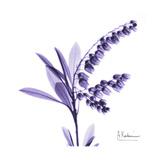Liljekonvalj Exklusivt gicléetryck av Albert Koetsier