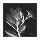 Mandelilla Shadow 1 Kunstdrucke von Albert Koetsier
