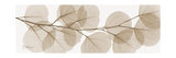 Sepia Kaluptos eucalyptus Giclée-Premiumdruck von Albert Koetsier