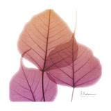 Bo Tree Pink Orange Giclée-Premiumdruck von Albert Koetsier