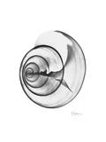Ramshorn Shell Gray Exklusivt gicléetryck av Albert Koetsier