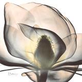 Magnolia Beauty Premium Giclee-trykk av Albert Koetsier