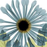 Chrysanthemum H68 Premium gicléedruk van Albert Koetsier