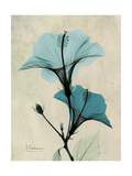 Hibiscus Moments Premium Giclee Print by Albert Koetsier