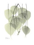 Bo Tree Nature Premium Giclée-tryk af Albert Koetsier