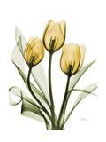 Golden Tulips Prints by Albert Koetsier