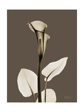 Tonal Calla Lily Print by Albert Koetsier