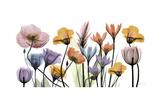 Flowerscape Portrait Posters by Albert Koetsier