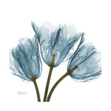 Tulips Blue Reproduction giclée Premium par Albert Koetsier