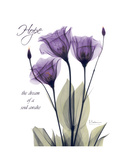 Purple Gentian Hope Stampa giclée premium di Albert Koetsier