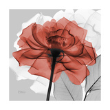 Rose on Gray 1 Premium Giclee Print by Albert Koetsier