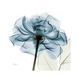 Teal Rose Premium Giclée-tryk af Albert Koetsier