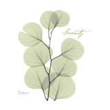 Eucalyptus Serenity Giclée-Premiumdruck von Albert Koetsier