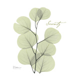 Eucalyptus Serenity Impressão giclée premium por Albert Koetsier