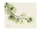 A Eucalyptus Moment Posters por Albert Koetsier