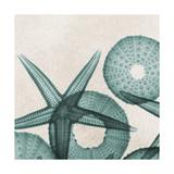 Under the Sea 5 Giclée-Premiumdruck von Albert Koetsier