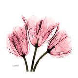 Soft Pink Tulips Kunst von Albert Koetsier
