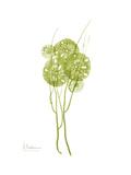 Sand Dollar Bloom Premium Giclee Print by Albert Koetsier