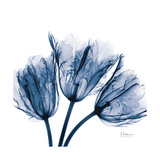 Tulips Indigo Premium Giclee Print by Albert Koetsier