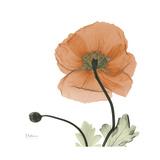 Orange Iceland Poppy Giclée-Premiumdruck von Albert Koetsier