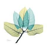 FicusBurkey Exklusivt gicléetryck av Albert Koetsier