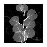 Eucalyptus Leaf Xray Plakater af Albert Koetsier